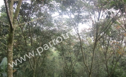 1.75acre land with an independent house for sale