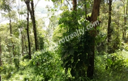 75cent water frontage land for sale near Padinjarathara.