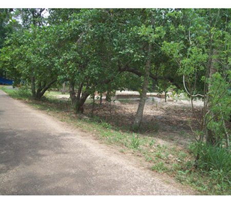Land for sale  in Pulinchode Muhamma, Alappuzha