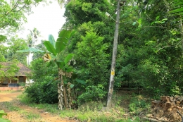 Independent House in 170 Cents for Sale in Kalady