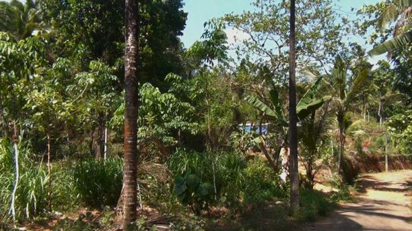 2acre 92cent Land for sale in Aralam Kannur district.