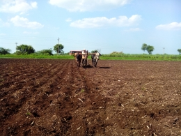 Land in Latur