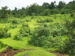 Land for Sale at Badlapur, Mumbai