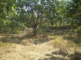 Land in South Goa
