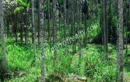 1.50 acre land  for sale in near nadavayal.