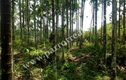 Beautiful 40cent land for sale in Karapuzha Dam