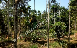 Well maintained 1.50acre land for sale near Nadavayal