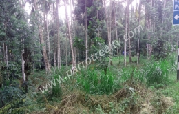10cent land for sale in (Areapally).