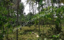40cent house plot for sale in  near Vazhavatta.wayanad
