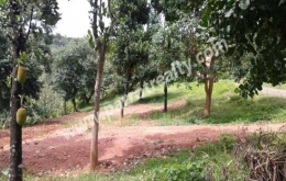 1.14acre house plot for sale in near mananthavady