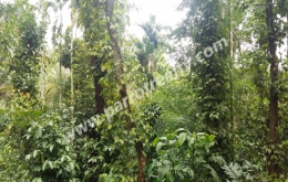 1.25acre house plot for sale in near Manalvayal