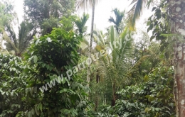 1acre house plot for sale in near Irulam.wayanad