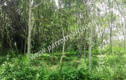 2acre land for sale in (Area pally) pulpally