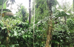 20cent land for sale in near Kenichira.wayanad