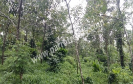 43cent house plot for sale in near manalvayal.wayanad.