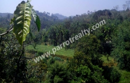 2acre land for sale in near Korom.wayanad