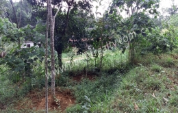 House plot for sale in Dwaraka, Wayanad.