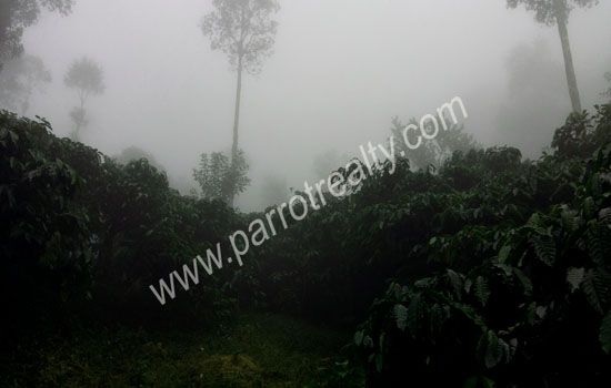 5 acre  land for sale near meenmutty water falls, Wayanad.