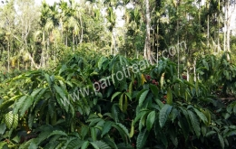 2acre land for sale in Koleri at 40lakh/acre