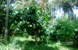 40 cent land for sale in AKG @ 60000/cent