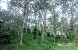 50 cent land @ 15 lakh in Cheeyambam. Wayanad