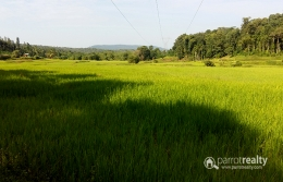 Well demanding 4.23 acre Farm for sale in Pakkom @70lakh.Wayanad
