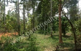 Land for sale in Wayanad