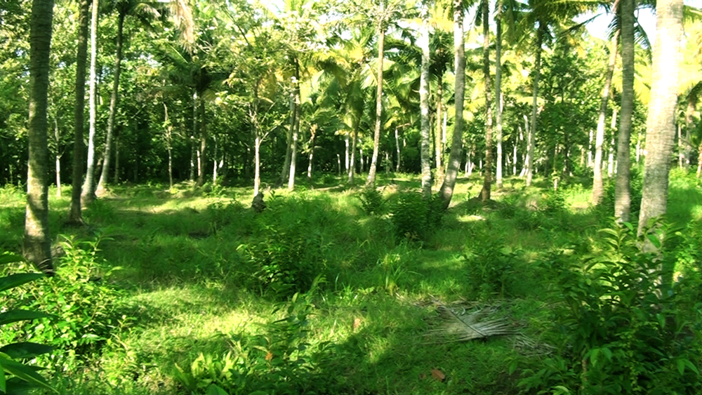 Land in kottayam