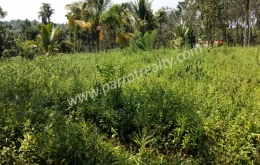 90 cent land for sale In poothadi, Wayanad.