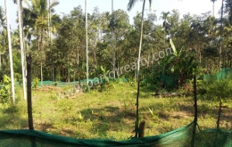 ​10cent land for sale In Cheengodu, Wayanad.