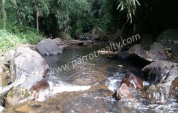 ​4acre 46 cent land for sale In Kavumannam, Wayanad.