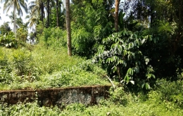 1.5acre land for sale In Appad(Meenangadi), Wayanad.