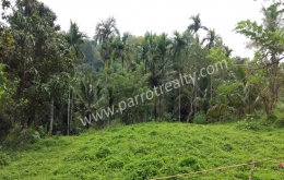 4acre 46 cent land for sale In Kavumannam, Wayanad.