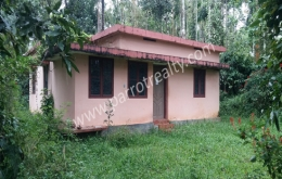 1acre land with small house for sale In Kadalmadu, Wayanad.