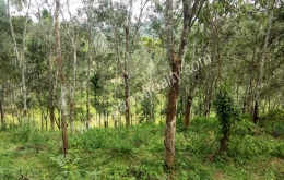 1 acre 52 cent land for sale In Kenichira, Wayanad.