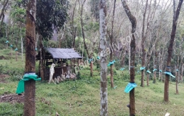 2acre 50cent  land with small house for sale in meenangadi, Wayanad.