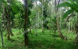 1.15 acre land for sale In kenichira, Wayanad.