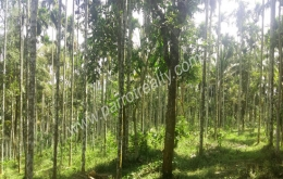 2acre land for sale In Thazhamunda(kenichira), Wayanad.