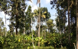 land for sale near AKG(Meenangadi), Wayanad.