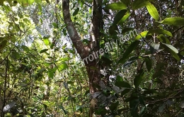 73cent land for sale In Valad -Mananthavady Taluk at 6.5lakh