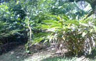 Land for sale in Wayanad Kerala