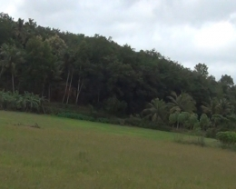 28.5 CENT LAND,PLOT  FOR  SALE  IN  KOLLEMCODE , KUTTIPADAM  PALAKAD DIST