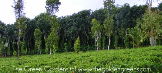 Residential Land for immediate sale in Anappara Wayanad Kerala, India